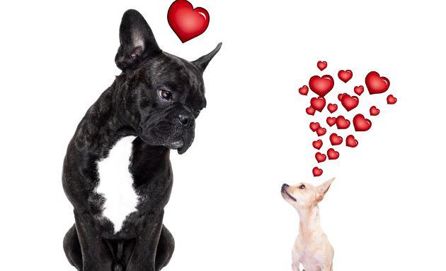 Tu-perro-y-gato-merecen-novia-Los-mejores-sitios-de-citas-para-mascotas-1
