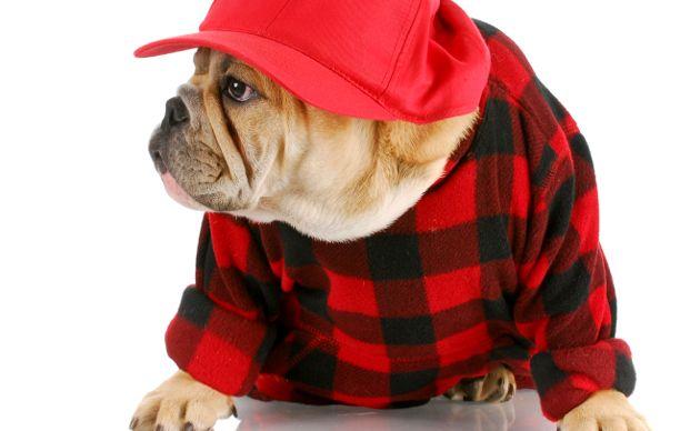 Tu-perro-y-gato-merecen-novia-Los-mejores-sitios-de-citas-para-mascotas-2