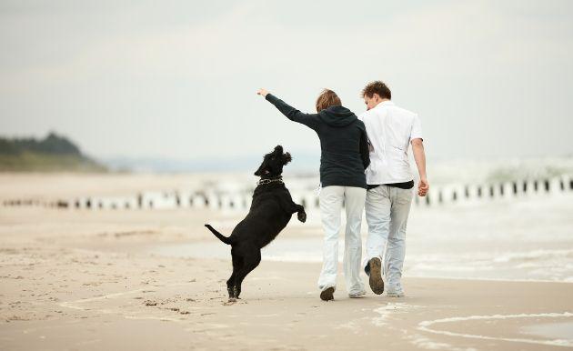 Tu-perro-y-gato-merecen-novia-Los-mejores-sitios-de-citas-para-mascotas-3