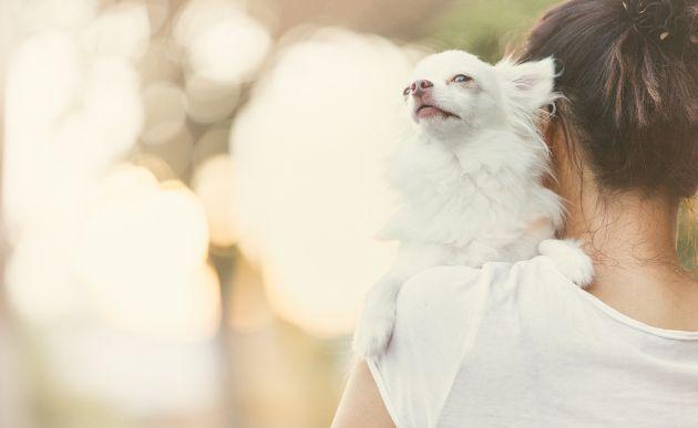 Tu-perro-y-gato-merecen-novia-Los-mejores-sitios-de-citas-para-mascotas-4
