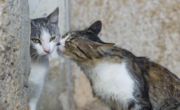 Tu-perro-y-gato-merecen-novia-Los-mejores-sitios-de-citas-para-mascotas